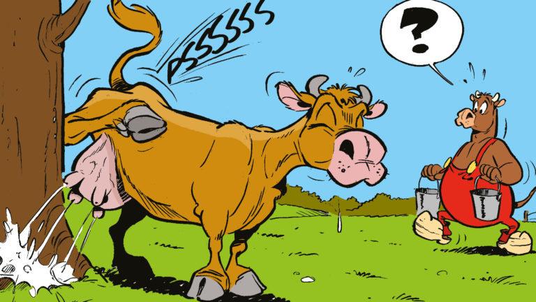 Ko markerar revir. Tkjur bär på mjölk.
